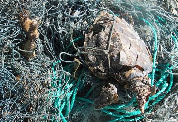 entangled-turtle