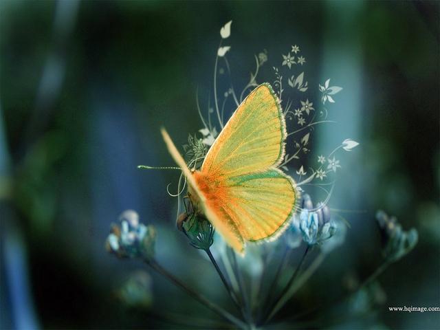 beautiful-butterfly-fly-nature-photography-yellow-Favim.com-100256