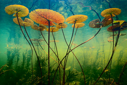 Greatest-Nature-Photographs-of-All-Time-5